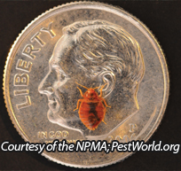 Bed bug size relative to a dime. Photo courtesy of NMPA- Pestworld.org